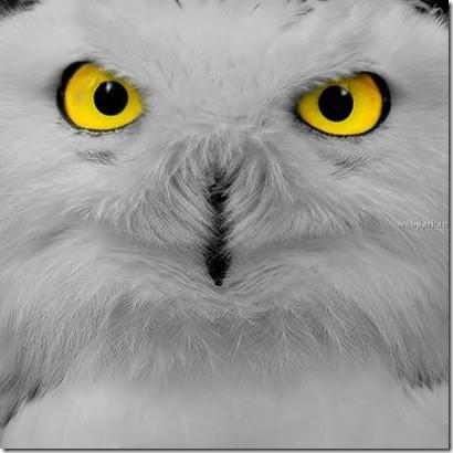 бдительное око