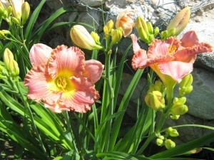 Один цветок + Один цветок и команда  из бутонов